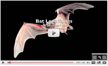 Bat song video on YouTube