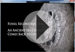 Video on reconstructed mollusk