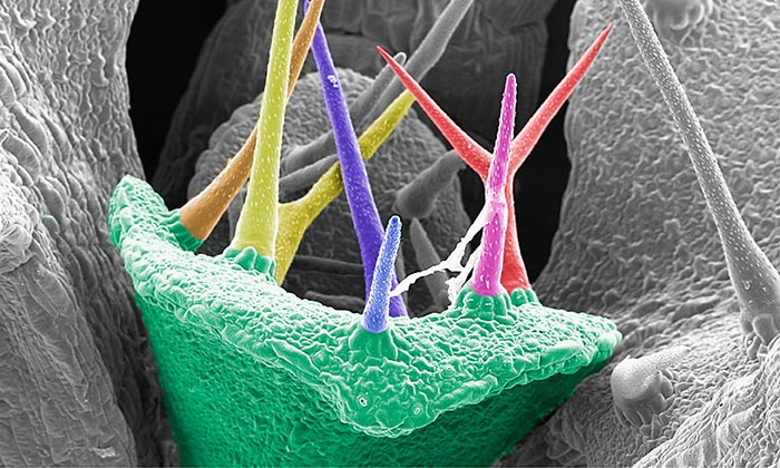 Plant epidermal cells taken with a scanning electron microscope