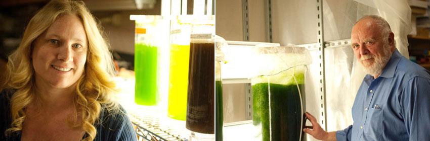 Algae researchers