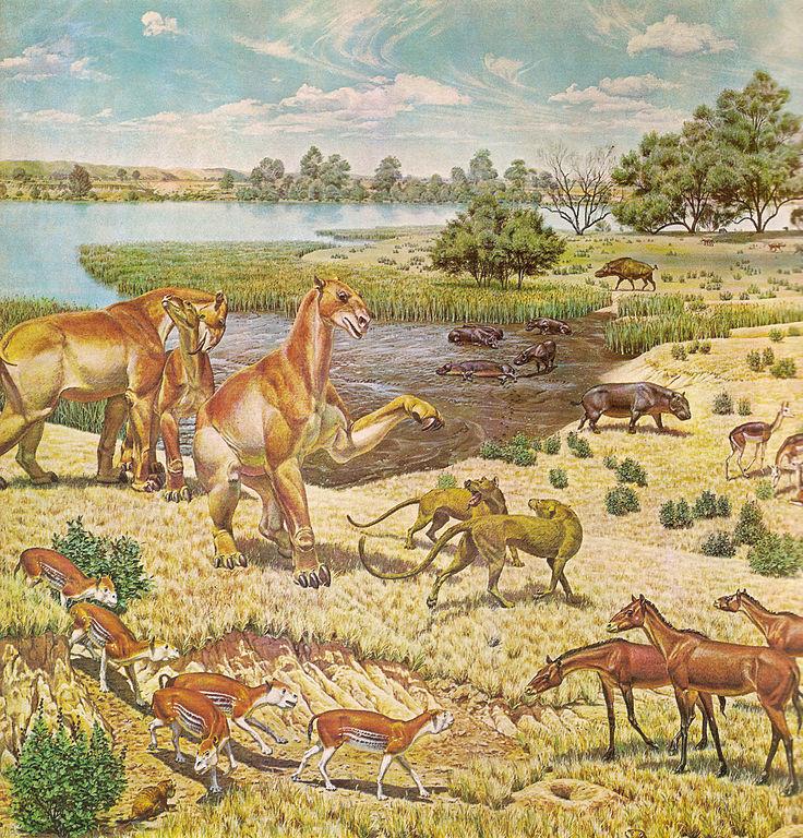 miocene fauna